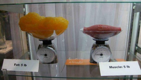 upoznavanje visina citrusa